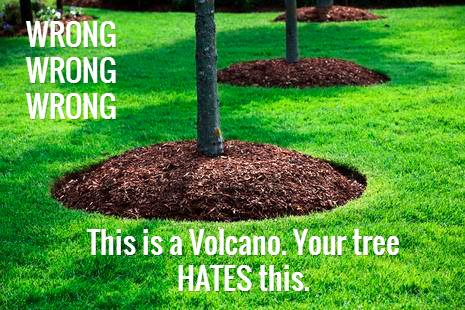 dont kill trees make sure