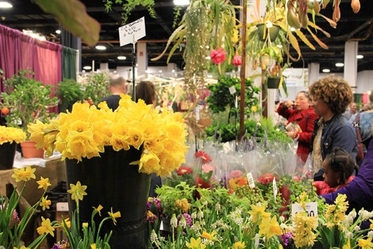 With Flower Show, Spring Arrives in Boston