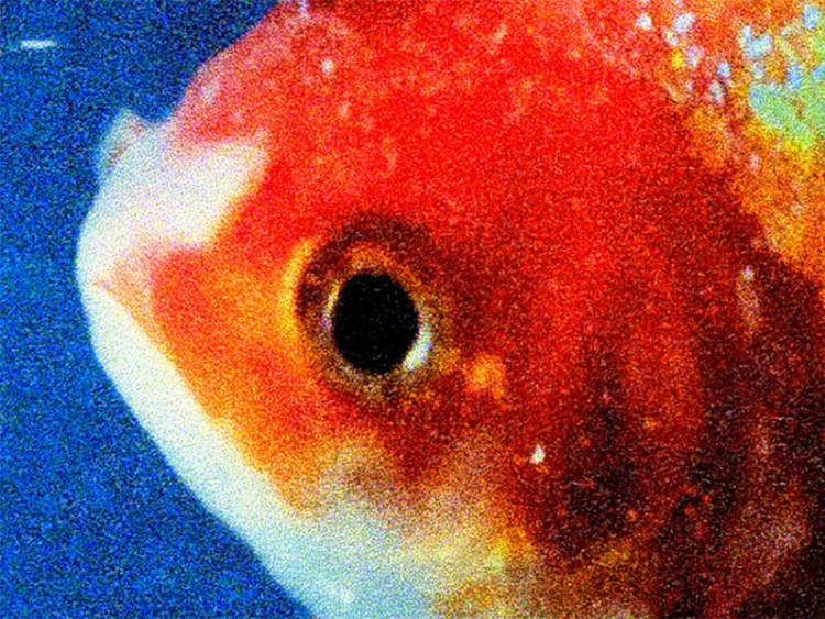 "Vince Staples Releases ""Big Fish Theory"" Album"