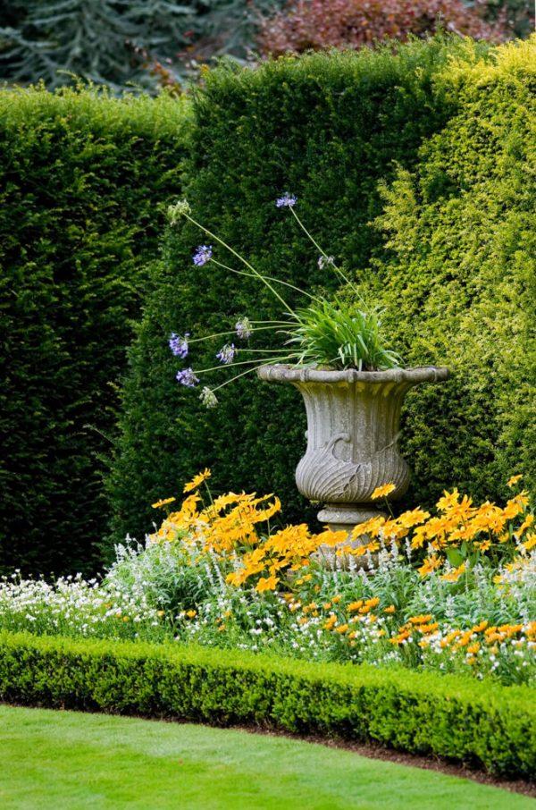 incredible garden hedge ideas