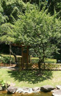31 Backyard Arbor Designs and Ideas