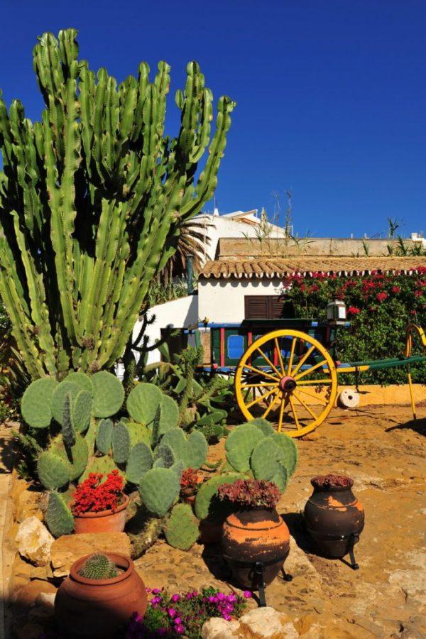 sharp cactus garden ideas