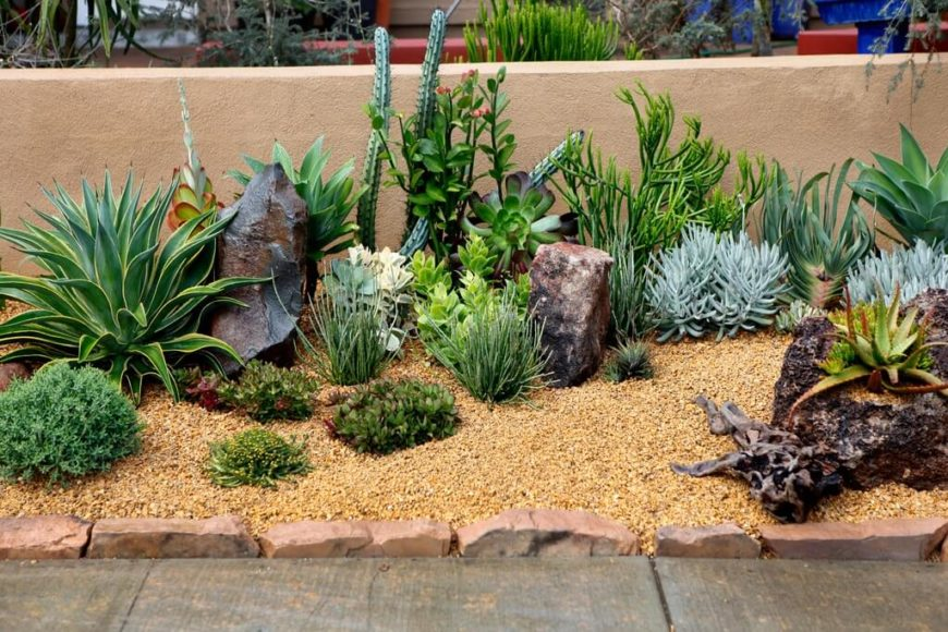 34 Sharp Cactus Garden Ideas