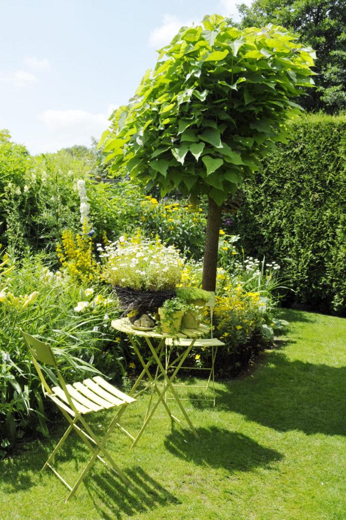 32 Brilliant Backyard Tree Ideas Home Stratosphere