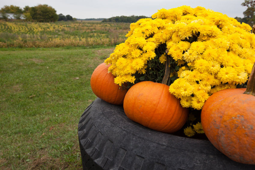 29 Flower Tire Planter Ideas for Your Yard (and Home