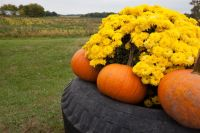 29 Flower Tire Planter Ideas for Your Yard (and Home ...