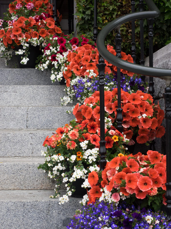 Fall Colored Background Wallpaper 64 Outdoor Steps With Flower Planters And Pots Ideas