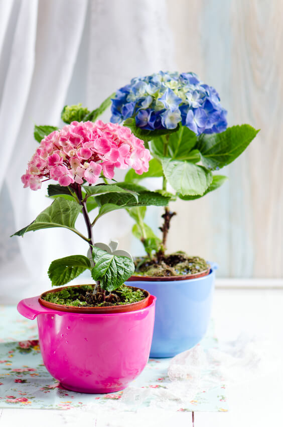 25 Hydrangea Flower Pot And Planter Arrangements PHOTOS