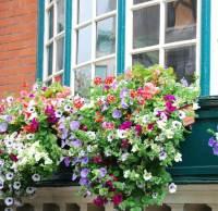 40 Window and Balcony Flower Box Ideas (PHOTOS)
