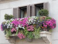40 Window and Balcony Flower Box Ideas (PHOTOS) - Home ...