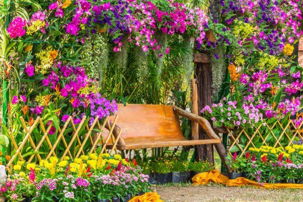 colorful garden ideas color