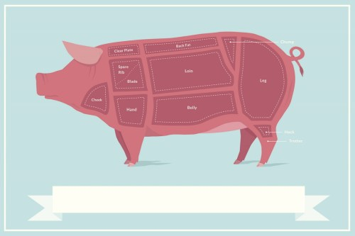 small resolution of cuts of pork butcher shop diagram poster 18x12 inch