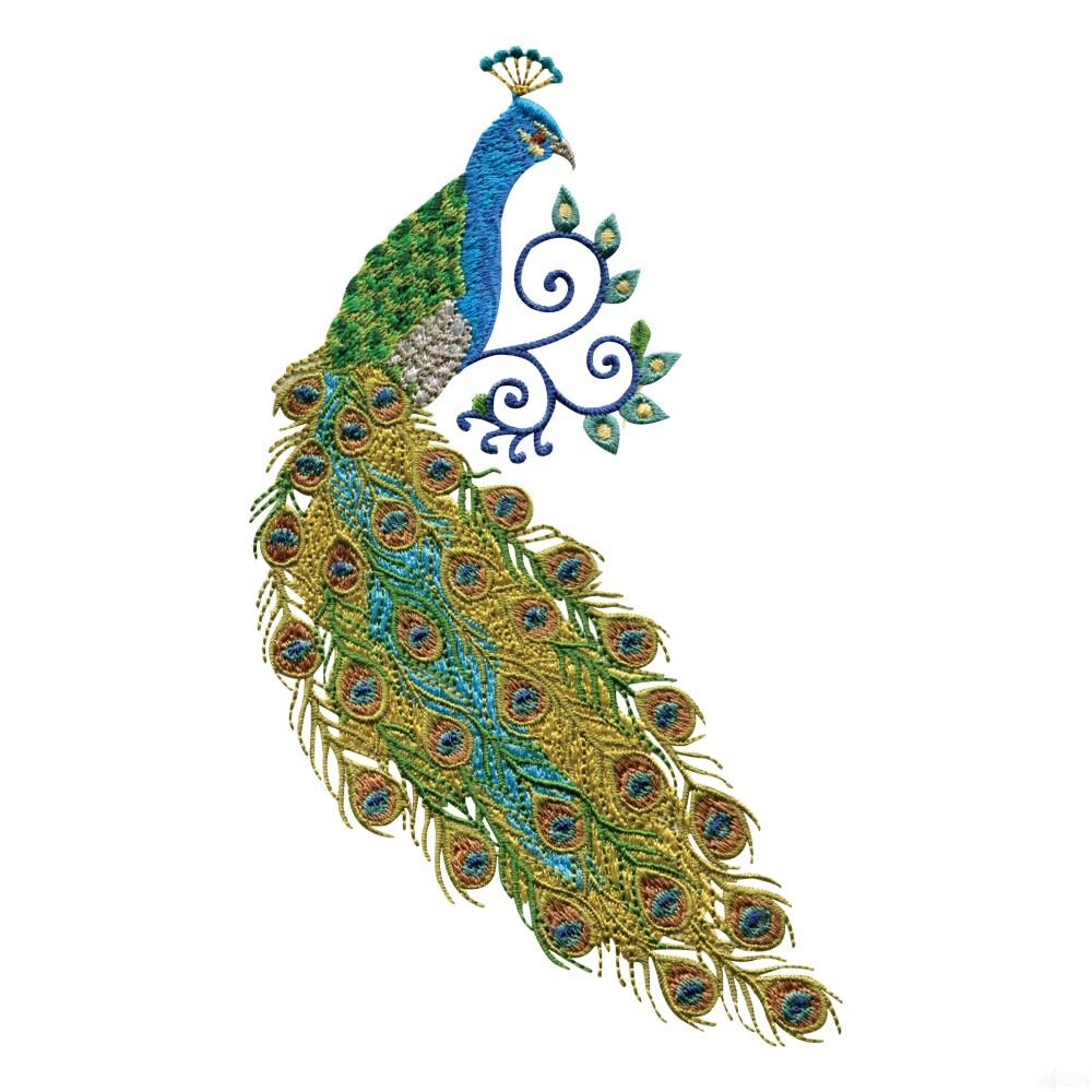 medium resolution of peacock clipart free