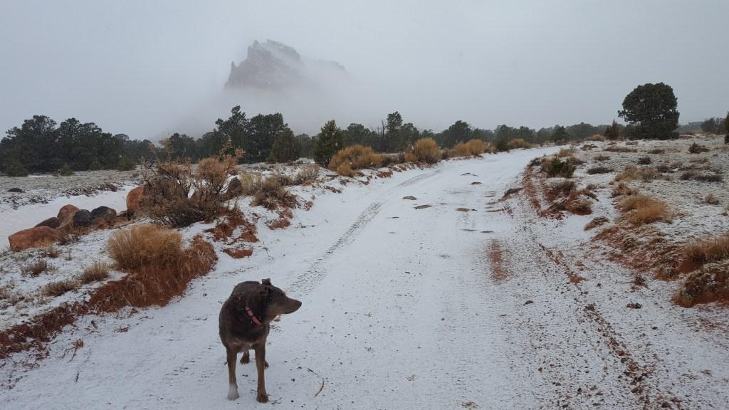 Snowy Walk