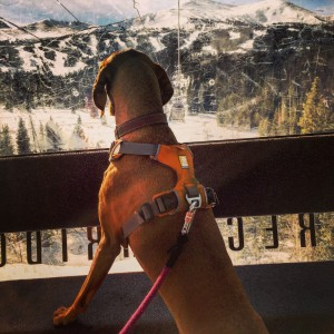 The Comprehensive Gear Guide For Your Adventure Dog