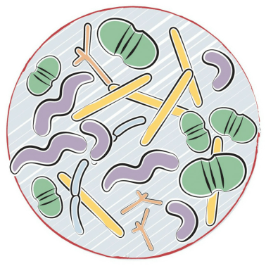 best at-home food sensitivity tests