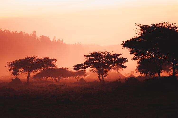 Coucher du soleil-Savane-Paysage