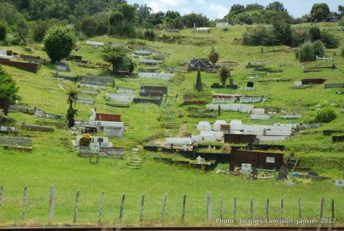 Cimetière māori, île du Nord, Nouvelle-Zélande