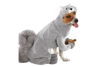 Top 10 Pet Costumes