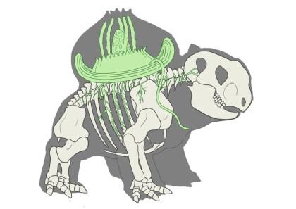 Anatomical study of a Bulbasaur