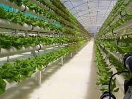 Hydroponics to grow the food we will eat