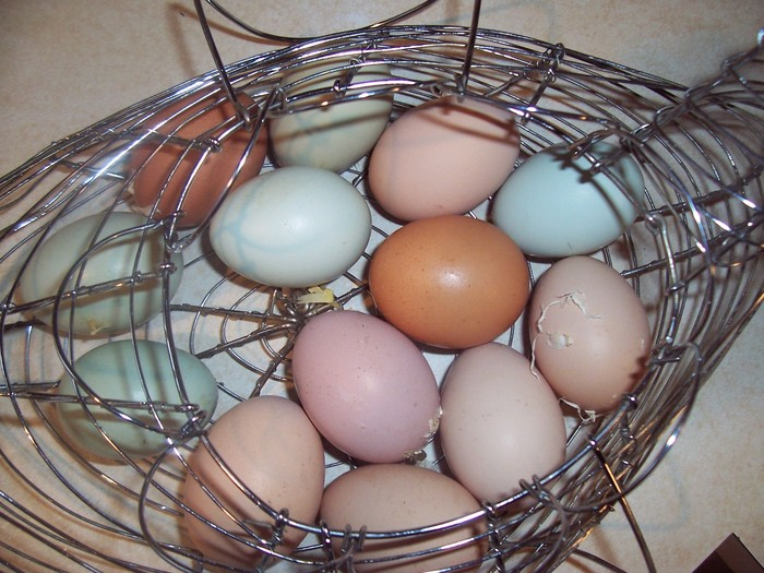 Martin Family FarmGrowing Our Egg Business by Bonnie