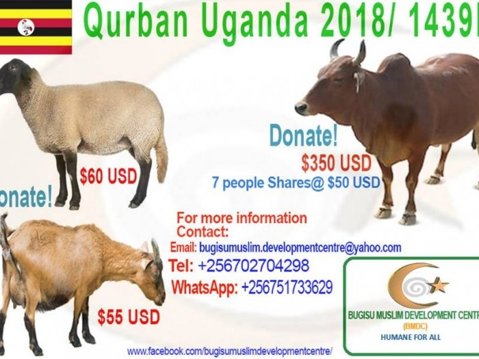 projects qurban 2018 1439h