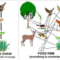 African Elephant Food Chain Diagram Wiring For A Single Pole Light Switch Lion Place Most Searched Right Now Chains And Webs Level Geography Ecosystems Change Rh Libguides Tts Edu Sg Tiger