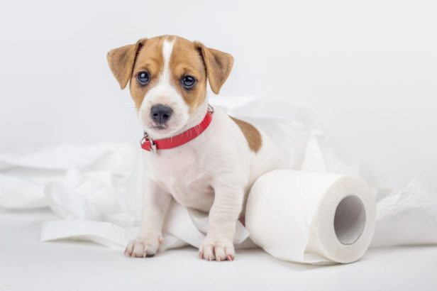 6. Practice Alone Time | 8 Tips To Help Your New Puppy Adjust | Life360 Tips