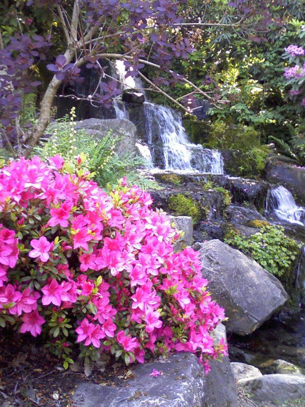 rhododendron garden ideas - home