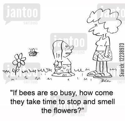 'If bees are so busy, how come they take time to stop and