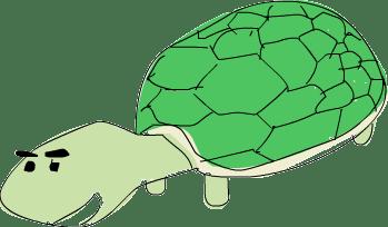 turtle???