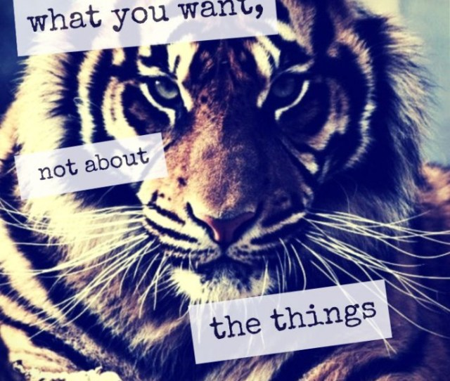 Brian Tracy What You Want Not What You