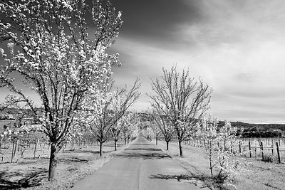 Napa Valley  Color  Black and White  Photos Prints