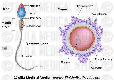 dna fingerprinting diagram labeled computer motherboard alila medical media   cell, molecular biology & genetics images