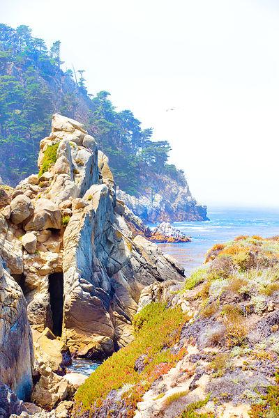Point Lobos  Color  Black and White  Photos Prints