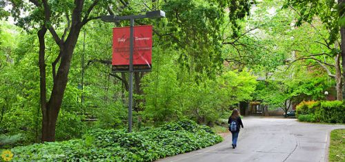 Image result for chico state trees