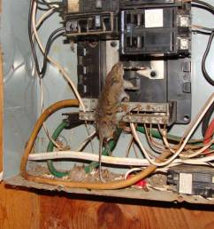 quot electrical panel inspection training video quot  [ 1024 x 768 Pixel ]