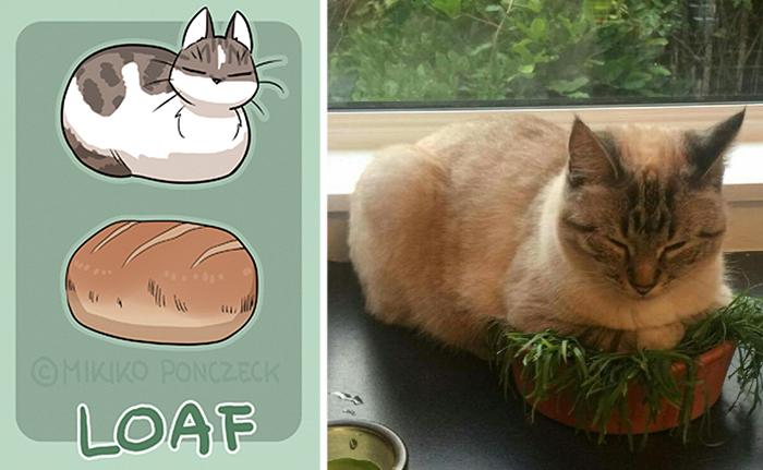 pan gato - ilustraciones de mikiko