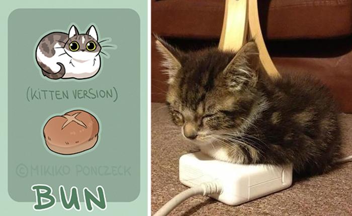pan bollo gato - ilustraciones de mikiko