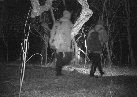 Camera trap catches intruders in Lazovsky Nature Reserve. Photo courtesy of the Zoological Society of London (ZSL).