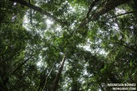 The Rainforest Canopy