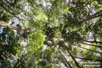 Rainforest Canopy Structure