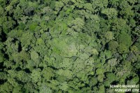 The Effect of the Canopy on Rainforest Biodiversity