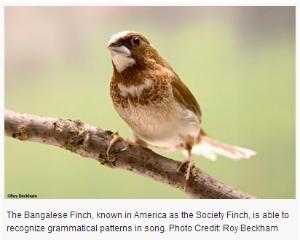 bird by roy beckham