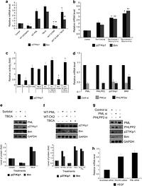 Activation of protein kinase CK2 attenuates FOXO3a
