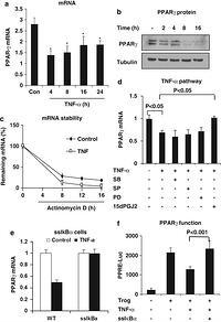 Interplay of pro- and anti-inflammatory cytokines to