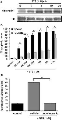 Cyclin-dependent kinase 5 is an upstream regulator of