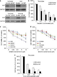 YAP modifies cancer cell sensitivity to EGFR and survivin