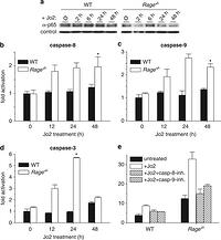 Depletion of the receptor for advanced glycation end